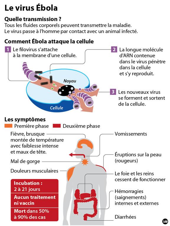 Fièvre Ébola - Afrique de l'Ouest - 2014  - Page 2 Ebola-desc1